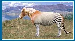 horse of many stripes